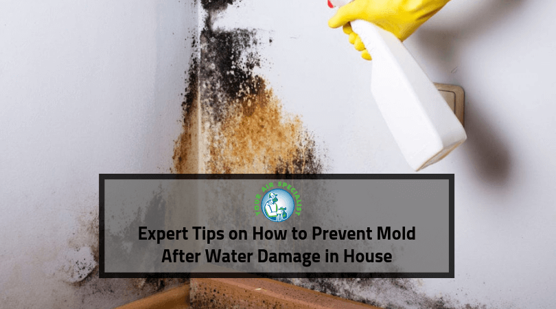 Expert Tips on How to Prevent Mold After Water Damage in House (1)