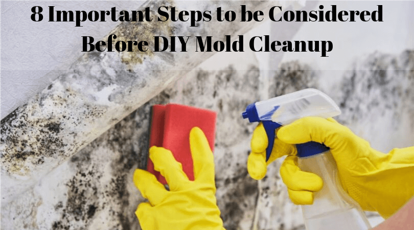 8 Important Steps to be Considered Before DIY Mold Cleanup