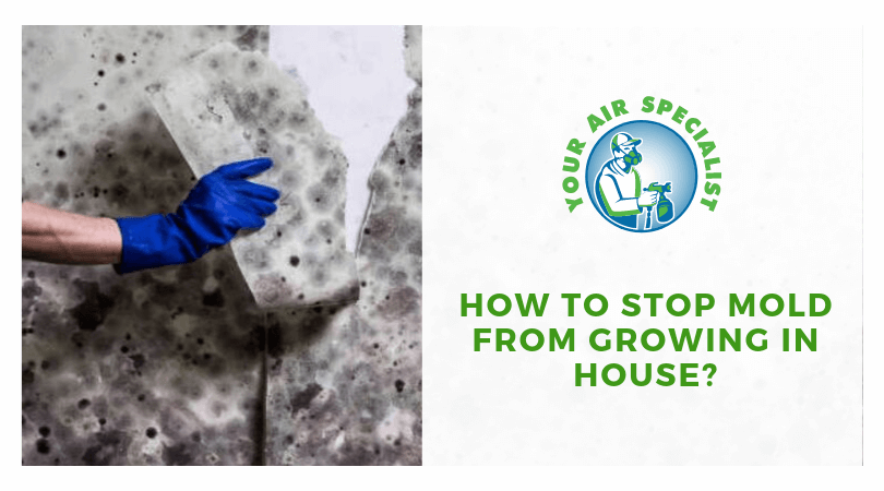 How to Stop Mold From Growing in House