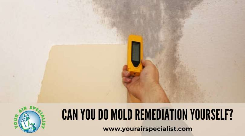 Can You Do Mold Remediation Yourself