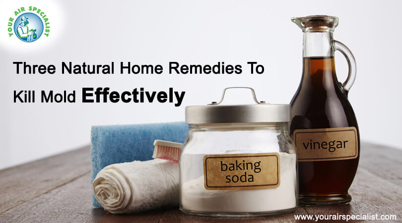 3 Natural Home Remedies To Kill Mold Effectively