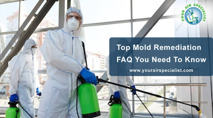 Top Mold Remediation FAQ You Need To Know